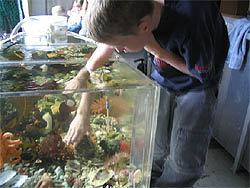 Student examining artificial aquatic habitat - Photo courtesy of Reid Brewer