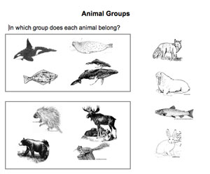 animalgroups_th