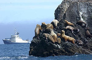 M/V Tiglax and Steller Sea lions in the Aleutian Islands